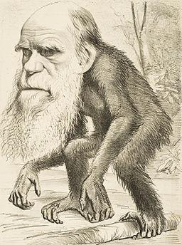 Editorial cartoon depicting Charles Darwin as an ape (1871)