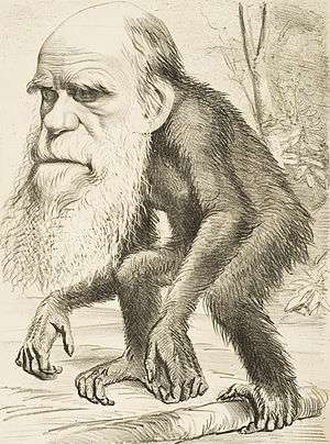 Creation–evolution controversy - A satirical image of Darwin as an ape from 1871 reflects part of the social controversy over the fact that humans and apes share a common lineage.