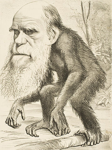 An 1871 caricature following publication of The Descent of Man was typical of many showing Darwin with an ape body, identifying him in popular culture as the leading author of evolutionary theory.[135]