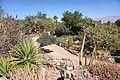 Eilat Botanical garden 12.jpg