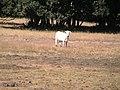 El señor de la Mesa de los Caballos - panoramio.jpg
