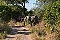 Elephant, Ruaha National Park (26) (28693050836).jpg