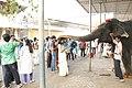 Elephant blessing in Mookambika temple.jpg