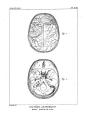 Encyclopédie méthodique - Systeme Anatomique, Pl21.png