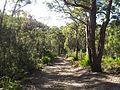 Engadine NSW 2233, Australia - panoramio (156).jpg