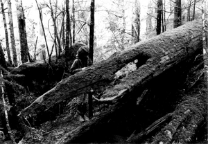 National Register of Historic Places listings in Wrangell, Alaska - Image: Etolin Canoe Bow