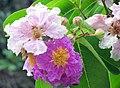 FLOWERS 4 (7170781849).jpg