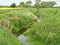 Fairham Brook Bunny - geograph.org.uk - 1335678.jpg