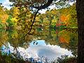 Fall-pond.jpg