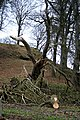Fallen Tree on Peak Tor - geograph.org.uk - 1194057.jpg