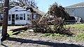 Fallen trees damaged homes in Panama City, FL.jpg