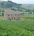 Farm - panoramio - Immanuel Giel.jpg