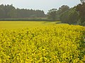 Farmland, Bothampstead - geograph.org.uk - 809915.jpg