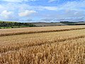 Farmland, Upper Lambourn - geograph.org.uk - 1575322.jpg