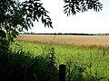 Farmland near Wolvey - geograph.org.uk - 203740.jpg