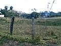 Fazenda - Entrada Vila Mariana - panoramio.jpg