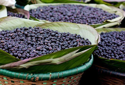 acaí o açaí (Euterpe oleracea) asaí, assaí, huasaí, manaca, chonta, palmito, naidi