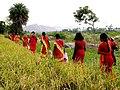 Female Shiva devotees in red.jpg