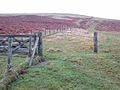 Fence on Whiteside Hill - geograph.org.uk - 644411.jpg