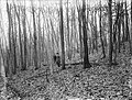 File--C5235-CC5244- Mine Brook, NJ (06c99d5b-c1f1-46e9-86a1-0ac96b9c0d39).jpg