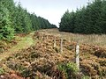 Firebreak in Kintyre Forestry. - geograph.org.uk - 256481.jpg
