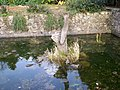 Fish Pond - geograph.org.uk - 741736.jpg