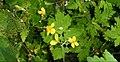 Fleur jaune 2.jpg