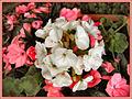 Flickr - ronsaunders47 - flower power..jpg