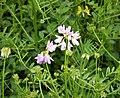 Flora (20) (44075477555).jpg