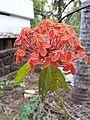 Flower1203.jpg