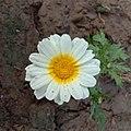 Flower1 .jpg