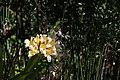 Flower (34850813131).jpg