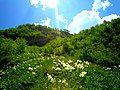 Flower meadow - Shahdag National Park.jpg