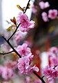 Flowers - panoramio (2).jpg
