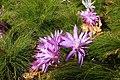 Flowers 1 (149944759).jpeg