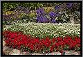 Flowers beside the Toowoomba Range rail tracks-3 (10351449384).jpg