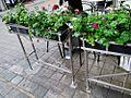 Flowers in Ledra and Onasagorou Street Nicosia Republic of Cyprus.jpg