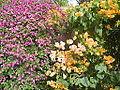 Flowers of Cuba -Laslovarga (6).JPG