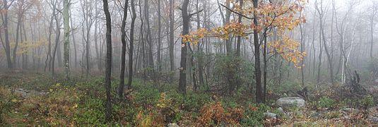 Foggy woods.jpeg