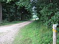Footpath on Woodland Track - geograph.org.uk - 1436121.jpg