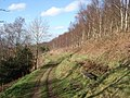 Footpath through birch wood on Pinnacle Hill - geograph.org.uk - 460320.jpg