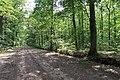 Forêt domaniale de Bois-d'Arcy 28.jpg