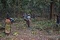 Forest - Shaktinagar - Dhenkanal 2018-01-25 9823.JPG