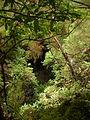 Forest Los Tilos La Palma.jpg