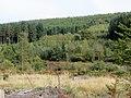 Forest close to Mallards Pike Lake - October 2012 - panoramio.jpg