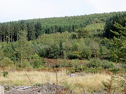 Forest close to Mallards Pike Lake - October 2012 - panoramio