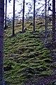 Forest near Hautalammi - panoramio.jpg