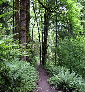 Forest Park (Portland, Oregon) - Wildwood Trail in June 2008