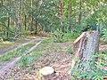 Forst Grunewald - Waldweg (Woodland Path) - geo.hlipp.de - 41373.jpg