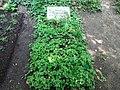 Friedhof heerstraße berlin 2018-05-12 (114).jpg